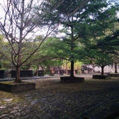 Trær som gir fin ly for solen
