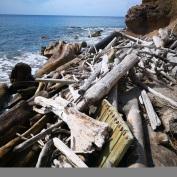 Rester av molo, store trær og søppel