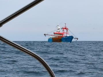Fiskebåt ved innsegling